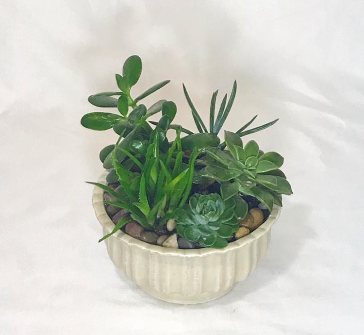Ceramic Succulent Garden