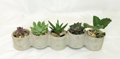 Long Succulent Planter