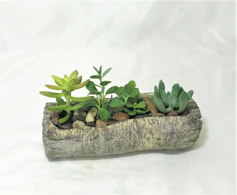 Succulent Log Garden