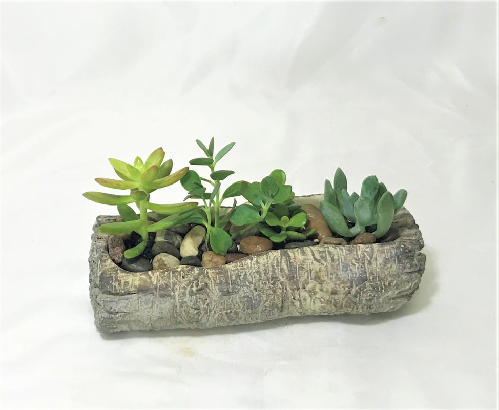 Succulent Garden - Log Planter
