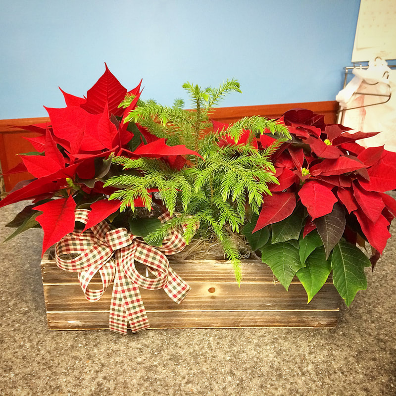 Christmas Triple Plant Basket