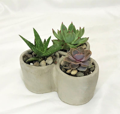 Triple Succulent Planter